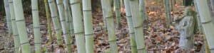 Gray 'Henon' bamboo canes