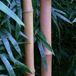 japanese timber canes