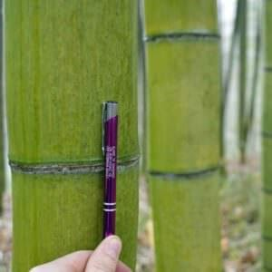 Displaying size of vivax cane next to a pen