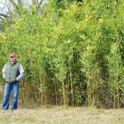 Okuboi grove picture at our farm