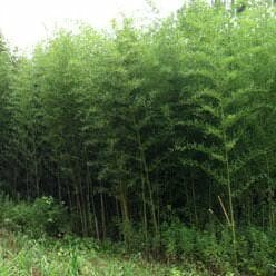 Alata grove