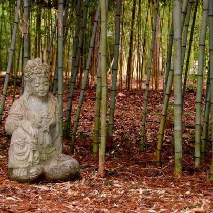Megurochiku grove picture