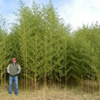 Humilis grove picture at our farm
