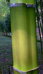 discolored square bamboo first getting exposed to sunlight