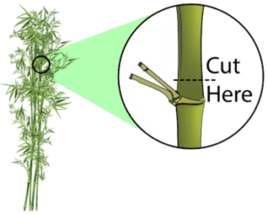 topping bamboo diagram