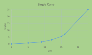 single shoot growth rate after 25 days
