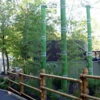 Giant bamboo in monkey exhibit