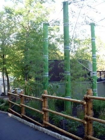 Giant bamboo in monkey exhibit