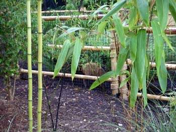 Bamboo habitat for Mutjacs