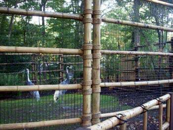 Cranes inside the bamboo fence