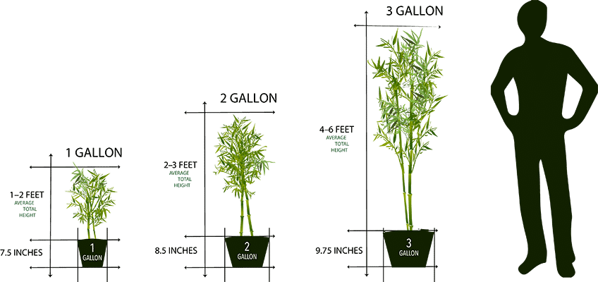 Mail order plant sizes 1 gallon to 3 gallon