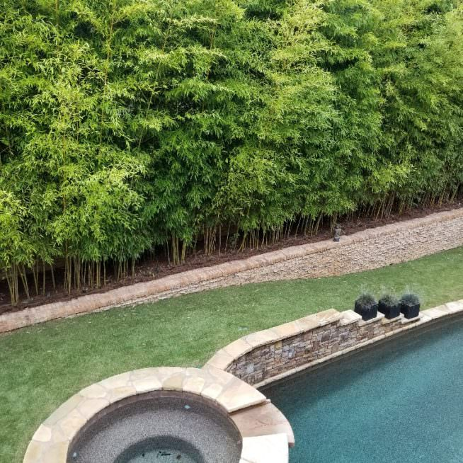 giant gray bamboo privacy screen