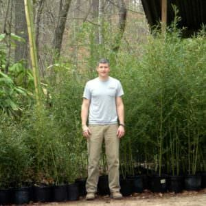 2 and 3 gallon bamboo plants