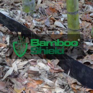 Bamboo Shield