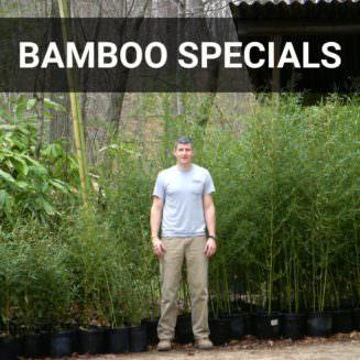 Bamboo Specials