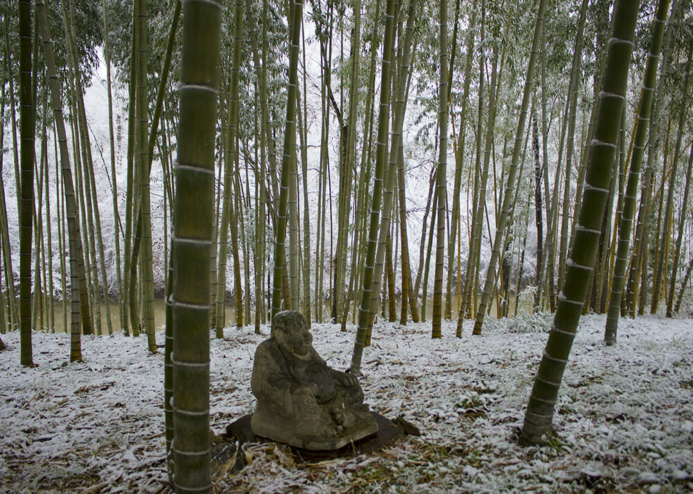 Grove of moso and vivax bamboo overlooking wolf creek. Snow covering the ground. Focused on Buddha statue.