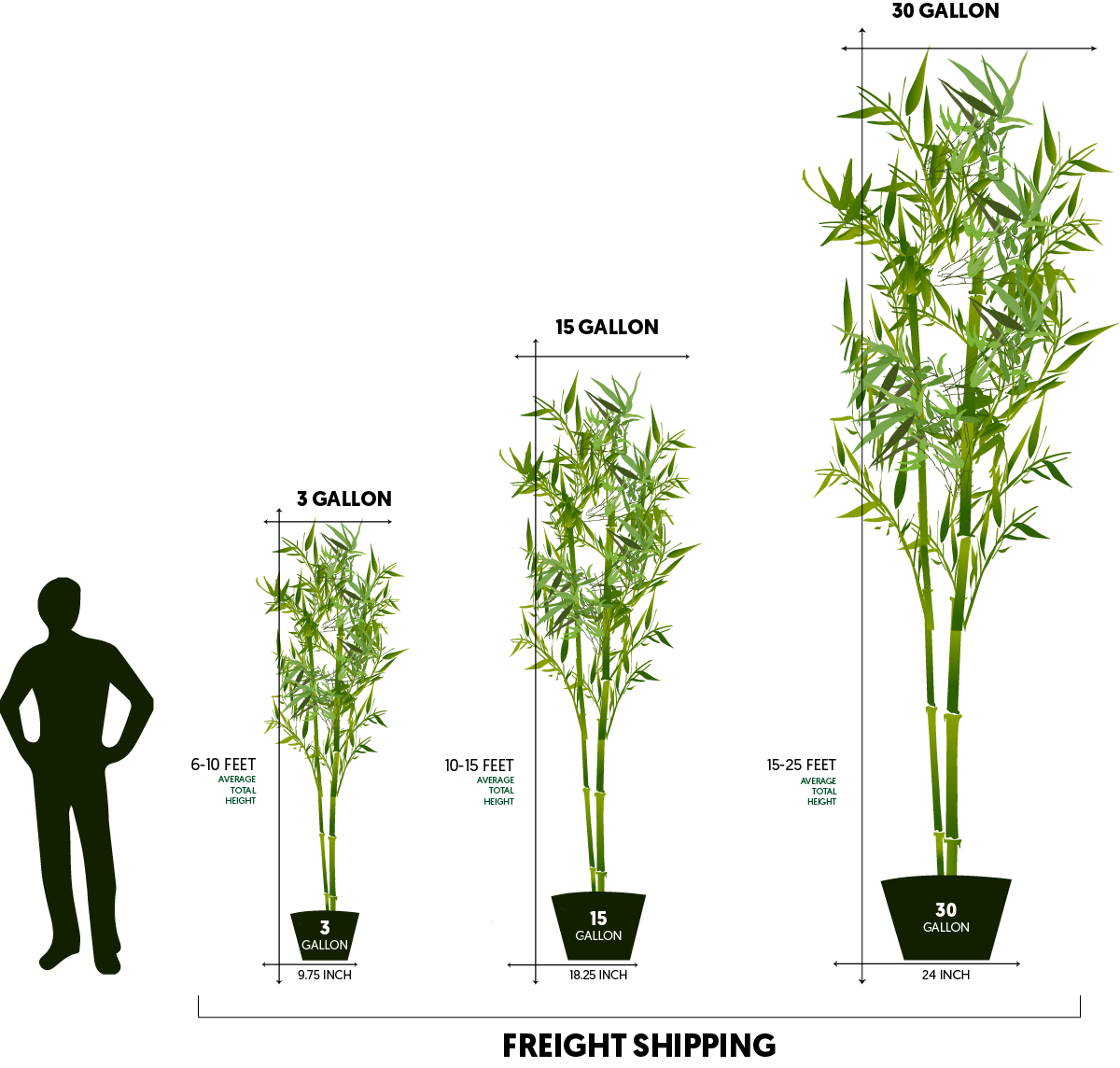 10 15 Feet Tall Bamboo 15 Gallon Lewis Bamboo