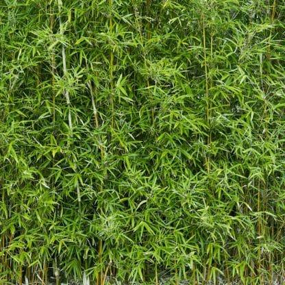 Funghomii Bamboo Closeup