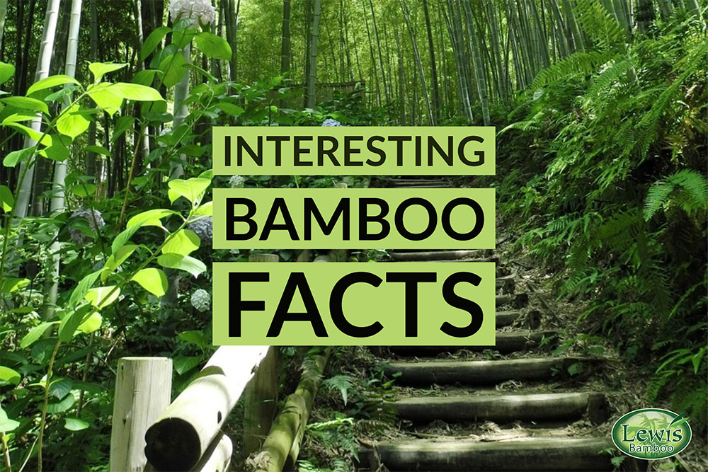 Interesting Bamboo Facts